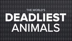 Das weltweit tödlichste Tier | Animation | Was is hier eigentlich los? | wihel.de