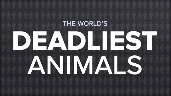 Das weltweit tödlichste Tier | Animation | Was is hier eigentlich los?