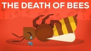 Der Tod von Bienen und die Auswirkungen erklärt | Was gelernt | Was is hier eigentlich los? | wihel.de