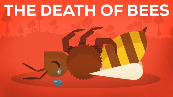 Der Tod von Bienen und die Auswirkungen erklärt