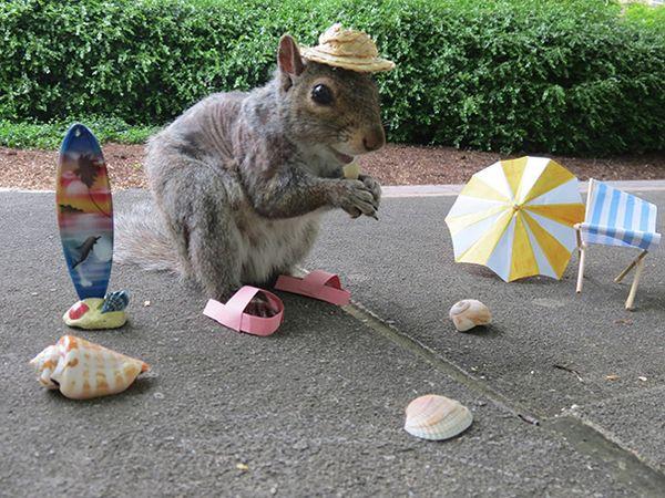 Mary Krupa, die Eichhörnchen-Flüsterin | Mädchenkram | Was is hier eigentlich los? | wihel.de