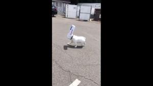 Der Trottelhund, der eigentlich gar keiner wahr | Lustiges | Was is hier eigentlich los? | wihel.de