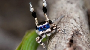 Die bestimmt freundlichste Spinne der Welt | Mädchenkram | Was is hier eigentlich los? | wihel.de