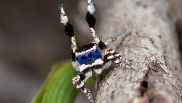Die bestimmt freundlichste Spinne der Welt