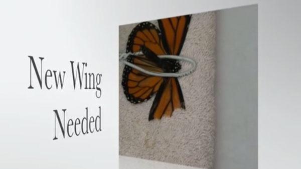 Wie man Schmetterlinge repariert | Was gelernt | Was is hier eigentlich los? | wihel.de