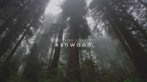 Herrliche Natur: Unterwegs im Redwood National and State Park | Travel | Was is hier eigentlich los? | wihel.de