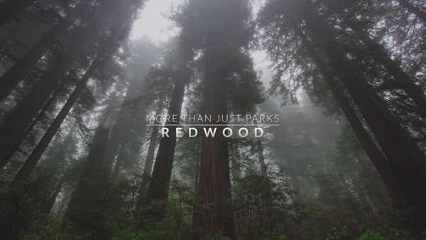 Herrliche Natur: Unterwegs im Redwood National and State Park