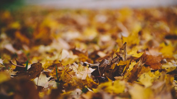 autumn-leaves-munich-2015-von-jason-battersby