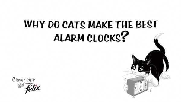 Warum Katzen der bessere Wecker sind #sponsored