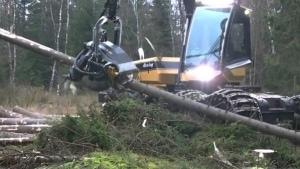 Eine Baumschneidemaschine in Aktion | Gadgets | Was is hier eigentlich los? | wihel.de