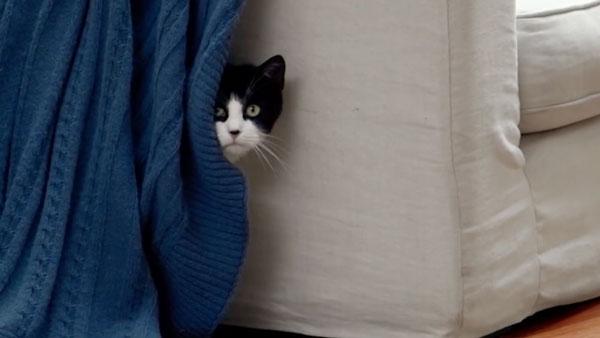 Katze finden leicht gemacht - Hide and Seek #sponsored | sponsored Posts | Was is hier eigentlich los?