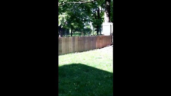 Ein Zaun, der kein Zaun sein wollte | Lustiges | Was is hier eigentlich los?