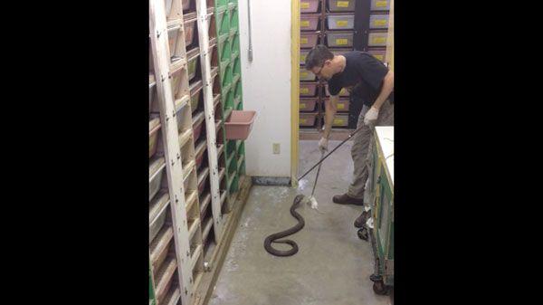 Traumjob: Kobra-Fütterer | WTF | Was is hier eigentlich los?