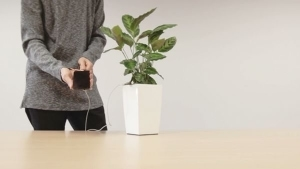 Eine Pflanze lädt euer Handy auf: Bioo Lite | Gadgets | Was is hier eigentlich los? | wihel.de