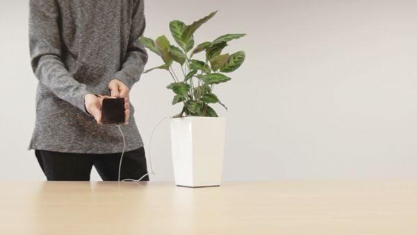 Eine Pflanze lädt euer Handy auf: Bioo Lite | Gadgets | Was is hier eigentlich los?