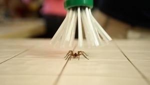 The Critter Catcher - Nun gehts den Spinnen human an den Kragen | Gadgets | Was is hier eigentlich los? | wihel.de
