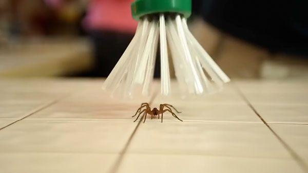 The Critter Catcher - Nun gehts den Spinnen human an den Kragen | Gadgets | Was is hier eigentlich los?