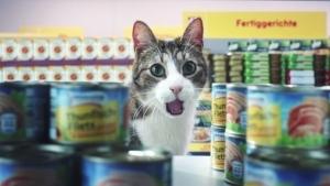 Bei Netto kaufen jetzt auch Katzen ein - Netto Markenvielfalt | sponsored Posts | Was is hier eigentlich los? | wihel.de