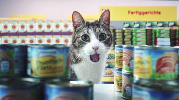 Bei Netto kaufen jetzt auch Katzen ein - Netto Markenvielfalt | sponsored Posts | Was is hier eigentlich los?