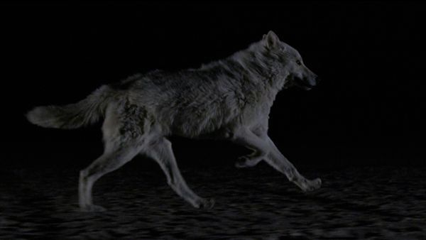 The Kills - Siberian Nights | Musik | Was is hier eigentlich los?
