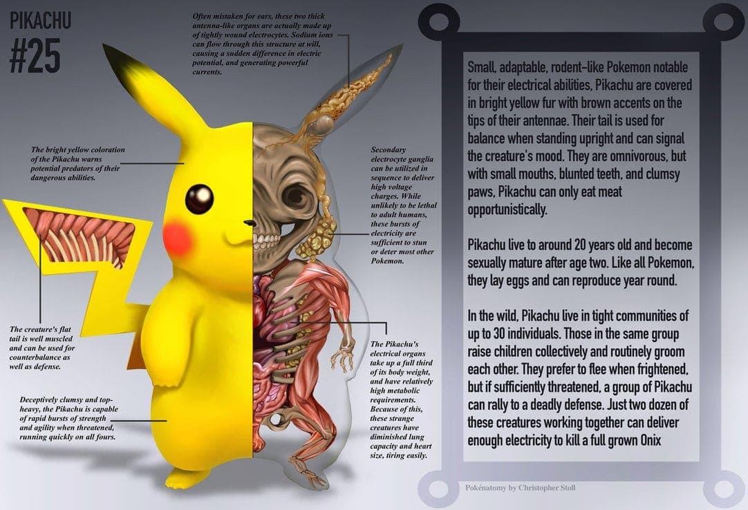 Die Anatomie der Pokemons von Christopher Stoll | Design/Kunst | Was is hier eigentlich los?