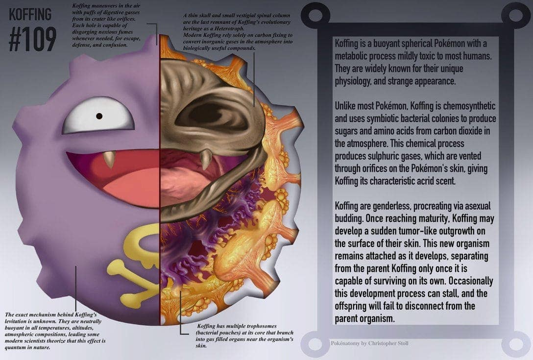 Die Anatomie der Pokemons von Christopher Stoll | Was is hier ...