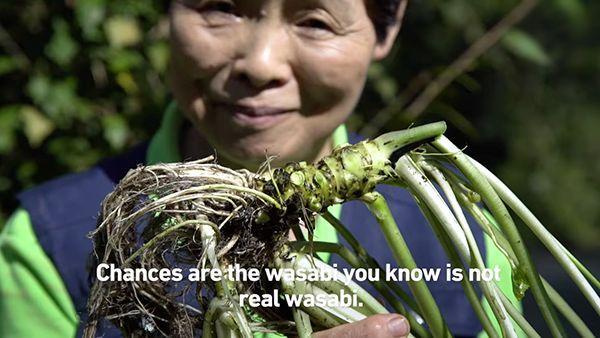 Der Unterschied zwischen Wasabi und Wasabi | Was gelernt | Was is hier eigentlich los?