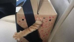 Gelöst: Das Rätsel um Schrödingers Katze | Lustiges | Was is hier eigentlich los? | wihel.de
