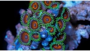 Schon schöne Korallen: Coral Colors | Timelapse | Was is hier eigentlich los? | wihel.de