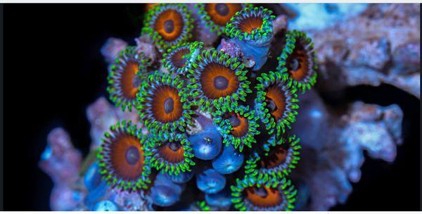 Schon schöne Korallen: Coral Colors | Timelapse | Was is hier eigentlich los?