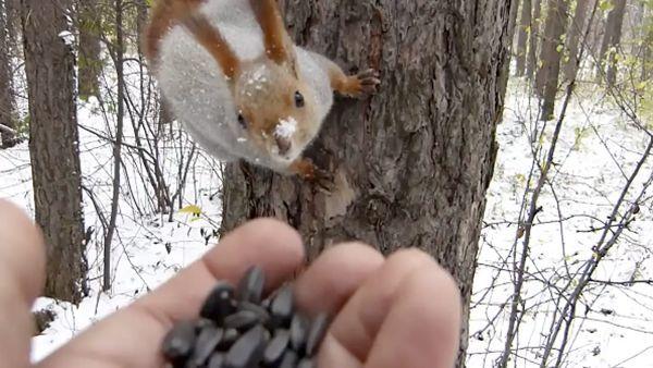 Tiere füttern im Wald | Awesome | Was is hier eigentlich los?