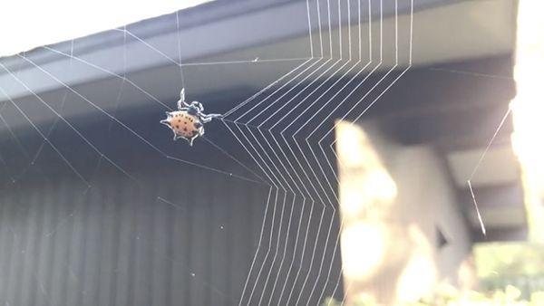 Wie eine Spinne ihr Netz spinnt | Awesome | Was is hier eigentlich los?