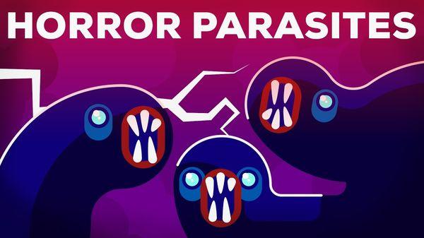 Die grausamsten Parasiten auf diesem Planeten | Was gelernt | Was is hier eigentlich los?
