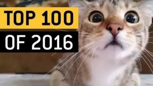 Die Top 100 viralsten Videos aus 2016 | WTF | Was is hier eigentlich los?