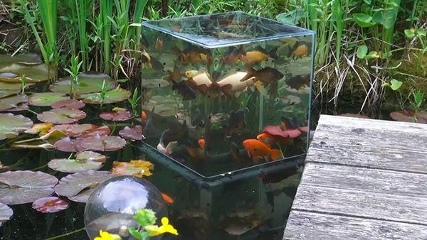 Das etwas andere Aquarium | Gadgets | Was is hier eigentlich los?