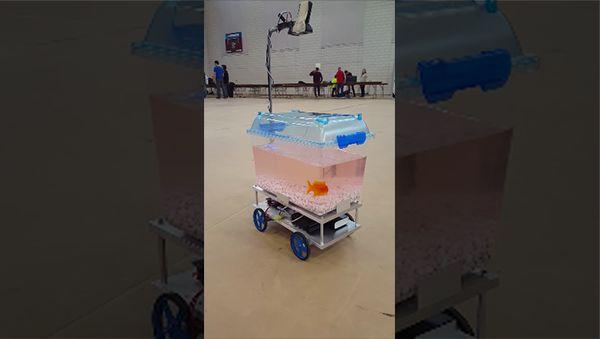 Ein Fisch auf Reisen | Gadgets | Was is hier eigentlich los?