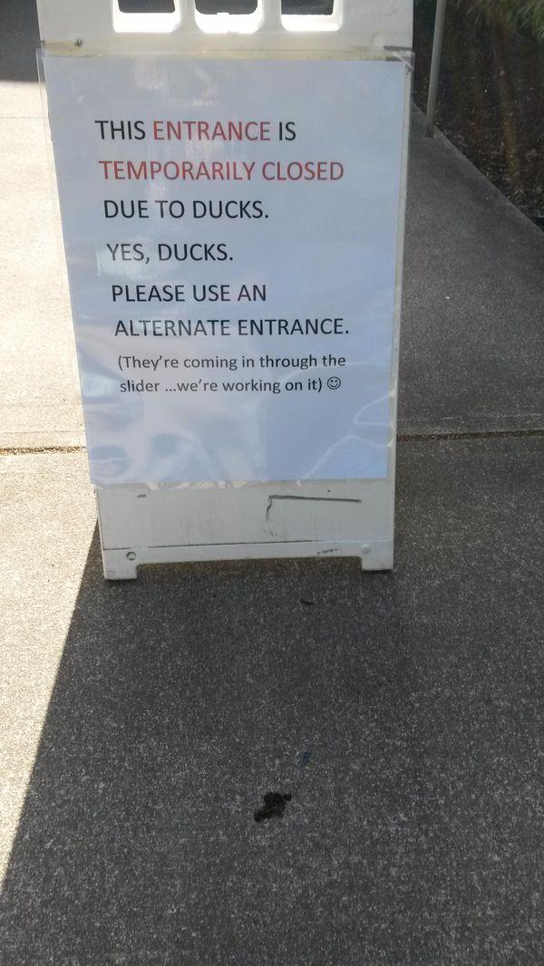 Schweden? Enten sind das viel größere Problem | Lustiges | Was is hier eigentlich los?
