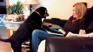 Hunde mit einem ausgeprägtem Aufmerksamkeitsdefizit | Lustiges | Was is hier eigentlich los? | wihel.de