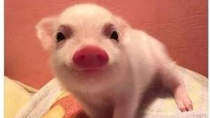 Ein Schwein zur Aufmunterung | Lustiges | Was is hier eigentlich los? | wihel.de