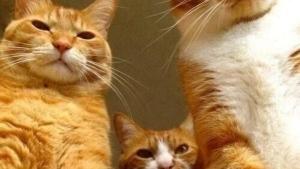 Was Katzen eigentlich denken | Lustiges | Was is hier eigentlich los?