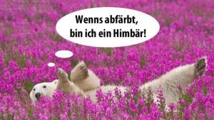 Wie Himbeeren ... pardon ... Himbären gemacht werden | Lustiges | Was is hier eigentlich los? | wihel.de