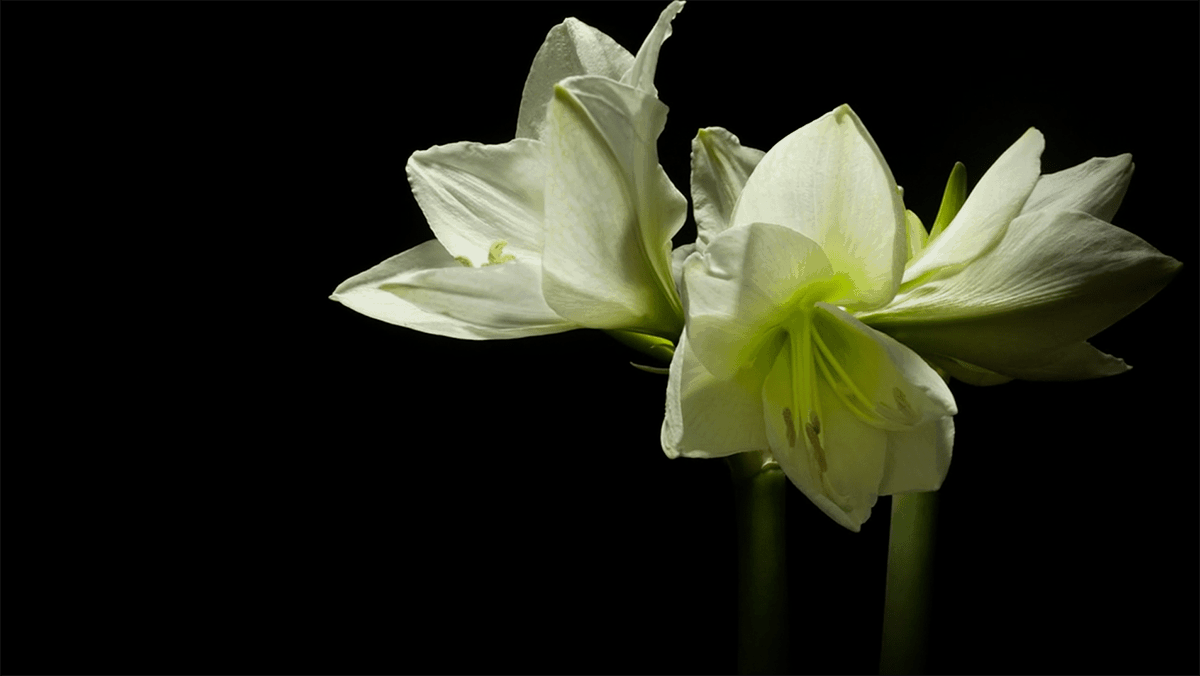 Timelapse: Spring | Timelapse | Was is hier eigentlich los?