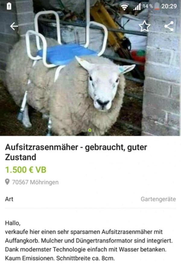Braucht jemand einen Aufsitzrasenmäher? | Lustiges | Was is hier eigentlich los? | wihel.de