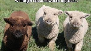 Können wir kurz über Baby-Alpakas sprechen? | Mädchenkram | Was is hier eigentlich los?