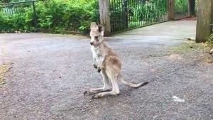 Nur ein kleines Baby-Kanguru | Mädchenkram | Was is hier eigentlich los?