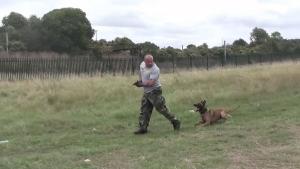 Wie gut ein Polizeihund hören kann | Awesome | Was is hier eigentlich los? | wihel.de