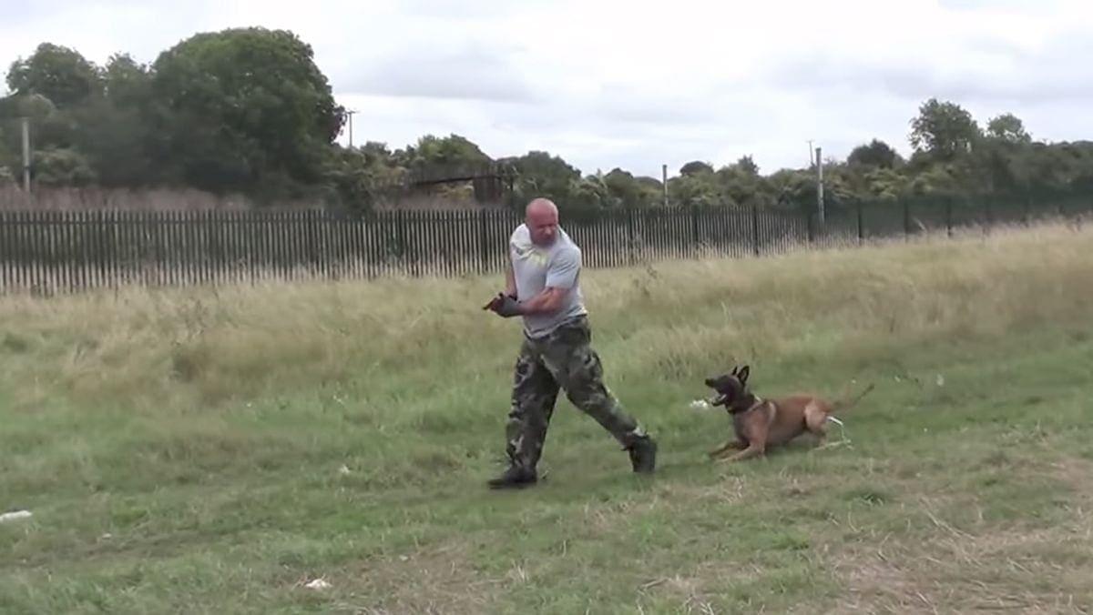 Wie gut ein Polizeihund hören kann | Awesome | Was is hier eigentlich los?