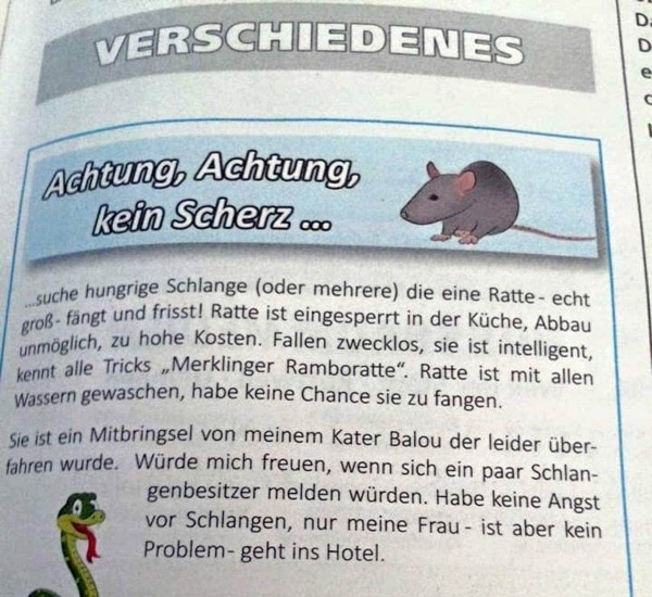 Rattenfänger gesucht | Lustiges | Was is hier eigentlich los? | wihel.de