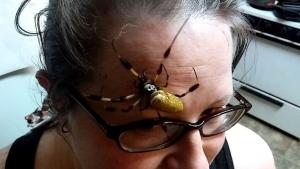 Eine riesige Spinne, die einer Frau übers Gesicht krabbelt | WTF | Was is hier eigentlich los?
