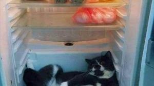 Der Grund für das ständige Nachsehen im Kühlschrank | Lustiges | Was is hier eigentlich los? | wihel.de